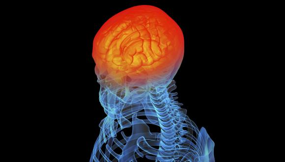 brain580-330